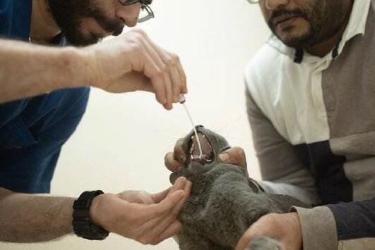 美国首现宠物感染 纽约州两日猫检测阳性