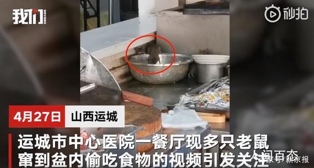 山西运城三甲医院餐厅出现老鼠 视频拍摄者:学猫叫都没吓跑
