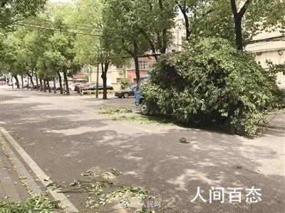 南京小区近千棵树被剃光头 园林部门紧急叫停