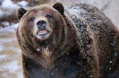 青海女牧民被棕熊叼走咬死 警方击毙肇事棕熊