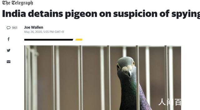 鸽子被指控为间谍面临入狱 网友:这是什么操作