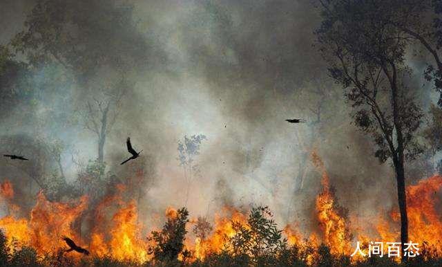 消防员放火毁林 一审判有期徒刑10年6个月