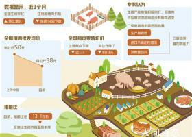 全国猪肉零售均价每公斤下降13元 多重因素推动猪价回落