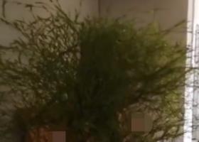 男子床头长出竹子 这究竟是怎么回事呢