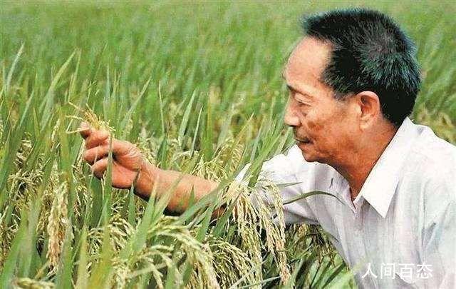 袁隆平称全国海水稻扩大至10万亩 种植范围已覆盖我国主要盐碱地类型
