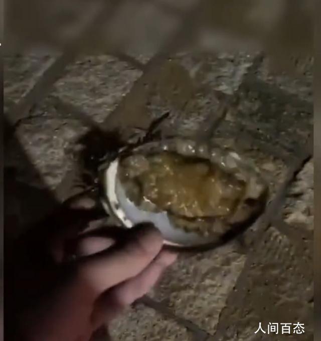 青岛游客海里捡鲍鱼被要500块 称:这种不问自取的行为基本就是偷了