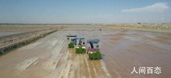 袁隆平团队在内蒙古试种海水稻 先行先试种植1000亩盐碱地稻作改良示范田