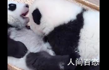大熊猫双胞胎顺顺溜溜病亡 出现拒食急性腹泻等症状
