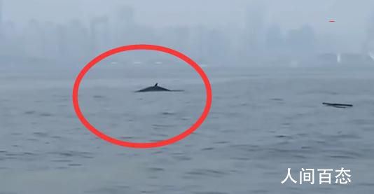 青岛三浴近海鲸鱼出没 视频在朋友圈转发引发关注
