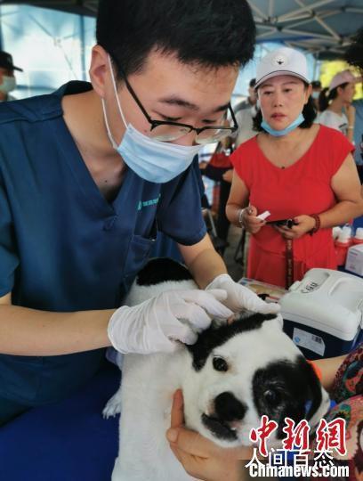 深圳犬只未植入芯片将被视为无证养犬 督促犬主主动为犬只注射电子芯片