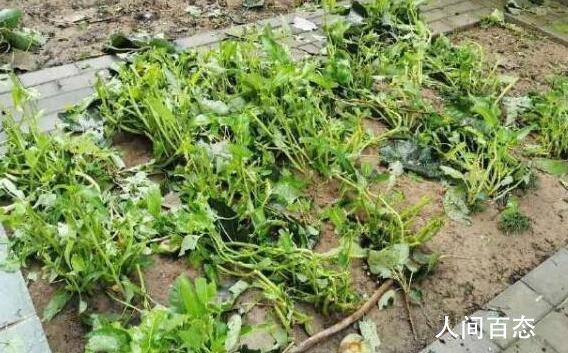 谢霆锋的菜园子塌了 菜农谢霆锋细数自己的损失