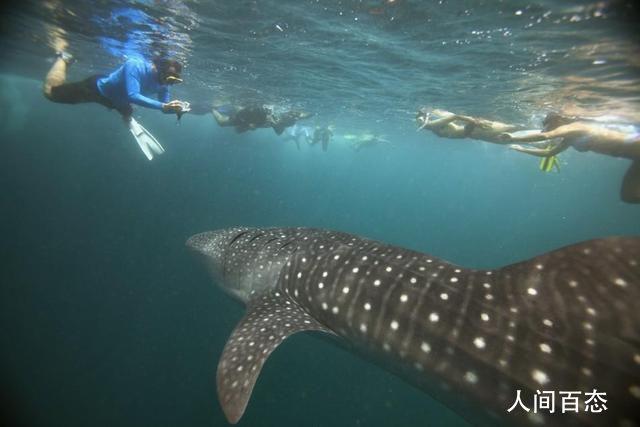 澳女子被鲸鱼一尾巴拍断肋骨 目前状态稳定将继续接受治疗