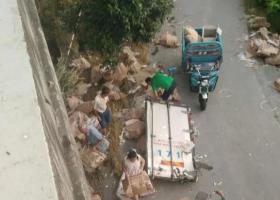货主回应遇车祸7吨猪肉遭哄抢 保险公司无法理赔