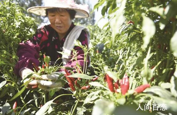 中国农民丰收节 中国农民丰收节是几号