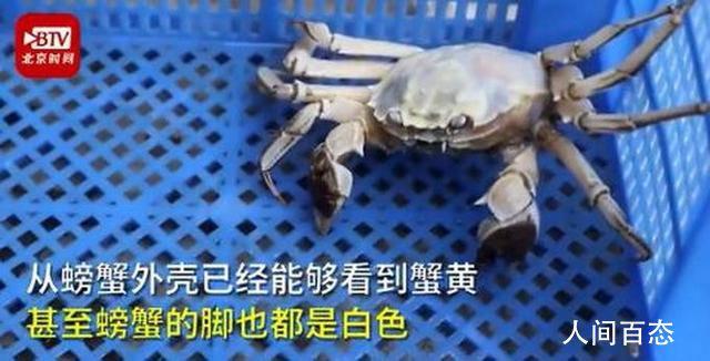 白色大闸蟹隔着壳能看到蟹黄 汉白玉色的螃蟹疑因是基因问题