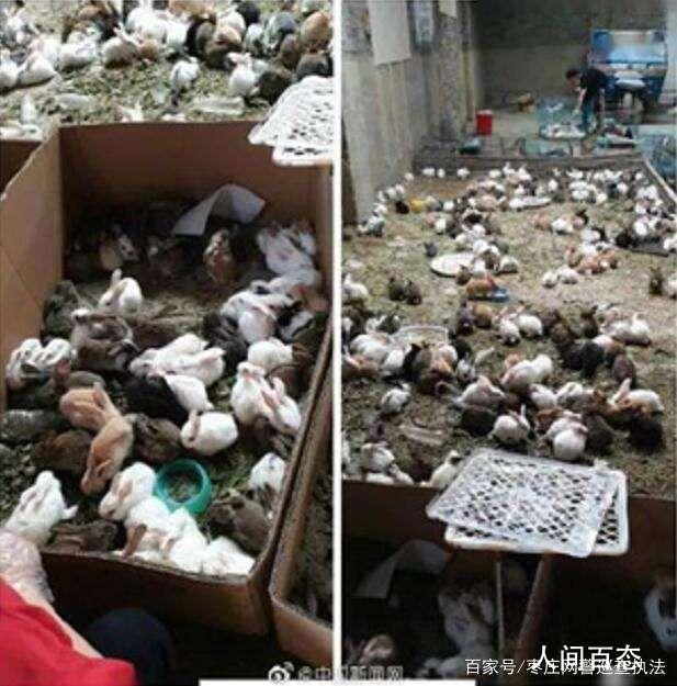 韵达回应数千只宠物滞留物流园死亡 目前前述事件仍在调查中