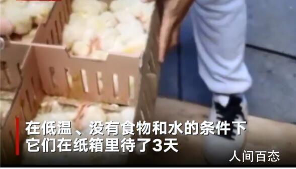 六千只被遗弃小鸡死于马德里机场 没有食物和水的条件下在纸箱里待了3天