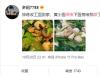 孙莉炫耀黄磊深夜为她做的菜 称:我必须撒把狗粮