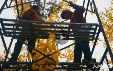 商场回应给银杏绑假树叶 因大风吹落了很多树叶对树进行了美化
