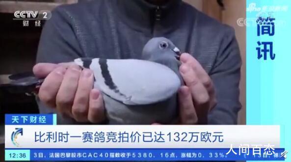 世界最贵赛鸽被拍出1030万 创下新的世界纪录