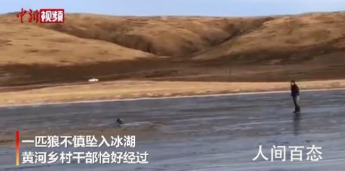 青海乡干部跳入冰湖救落水野狼 保积民个人资料介绍