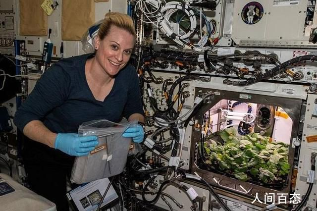 NASA收获史上首批太空萝卜 零重力环境下成功种植