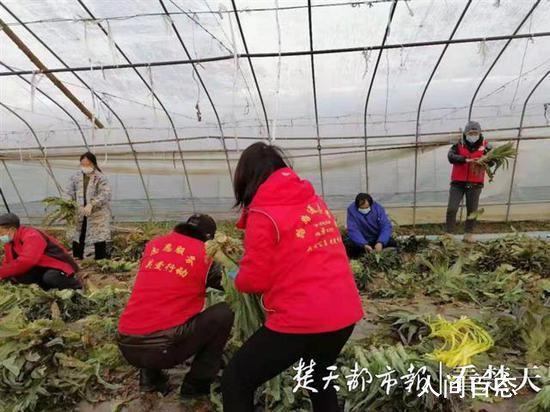 武汉向石家庄捐赠50吨蔬菜 300多名志愿者自发捐赠