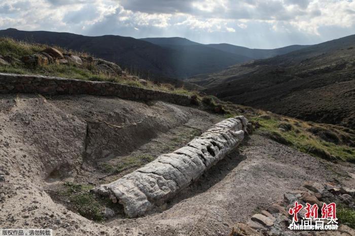 罕见!希腊发现2000万年前化石树 仍然完好无损