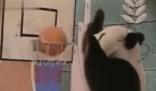 早期春晚的大熊猫表演 世界上最长寿的大熊猫一代人的记忆