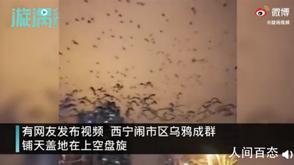 青海西宁上空乌鸦成群遮天蔽日 铺天盖地在上空盘旋黑压压一片