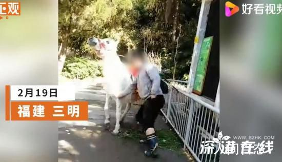 动物园回应男子挥拳暴打白马 其非工作人员马匹已经无恙