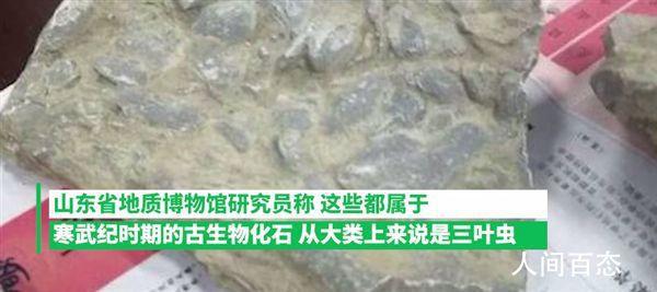 10岁男孩游玩时发现古生物化石 引起了众多网友的围观