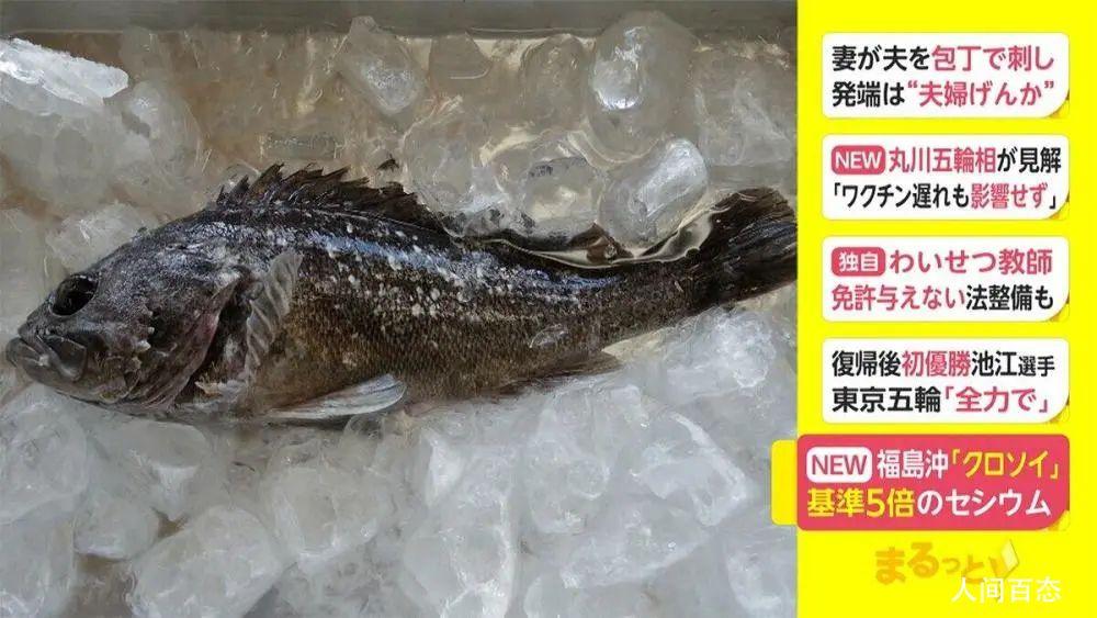 日本福岛附近再次发现超标辐射鱼 目前已停止捕捞该种鱼类进入市场销售