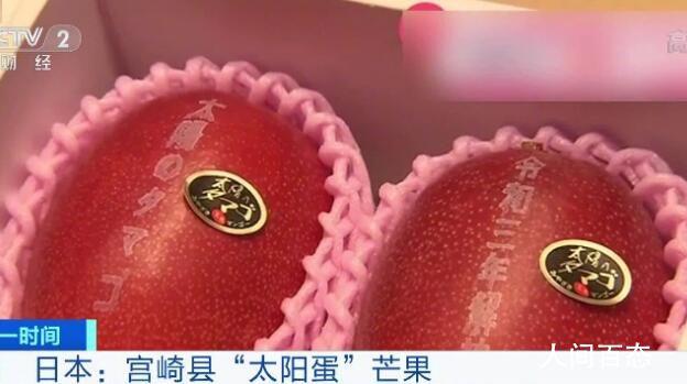 两芒果卖出1.2万 每年产量不多屡次在拍卖会中卖出高价