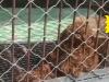 一动物园圈养泰迪 网友纷纷表示太离谱