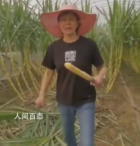 郎平卸任后首晒退休生活 这技术越来越好了节假日参加劳动